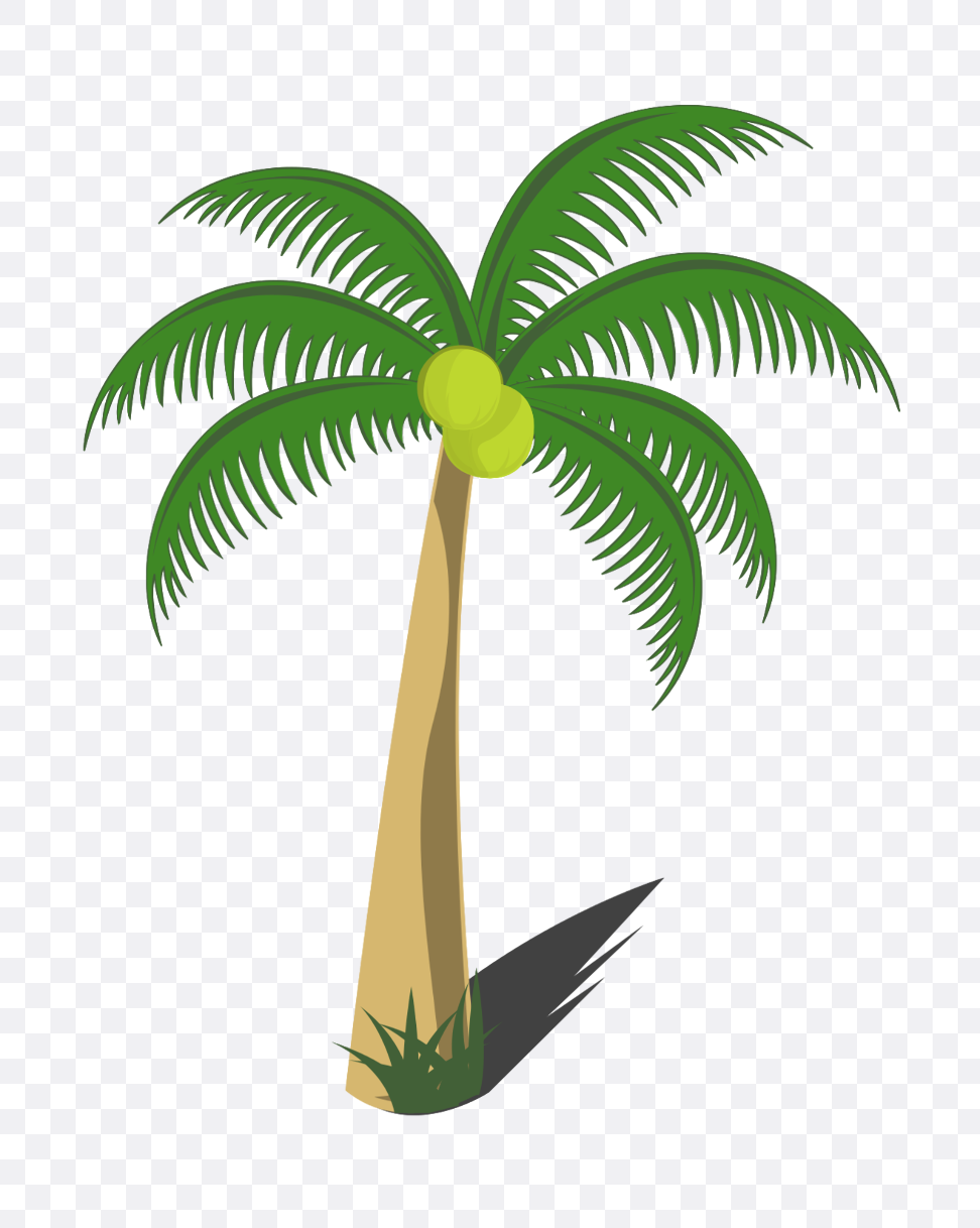 coconut tree images